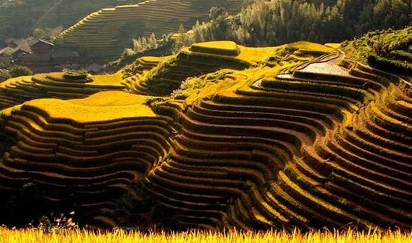 Longji Terraced Fields in Guilin